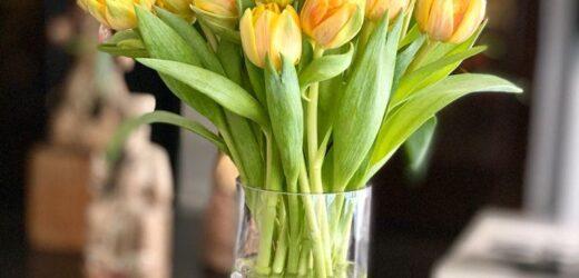 Un Ramo de Tulipanes